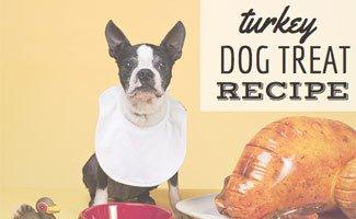 Dog eating turkey treat