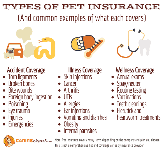Is Pet Insurance Worth It Comprehensive Guide Caninejournal Com