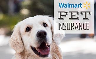Golden dog smiling (caption: How Does Walmart Pet Insurance)