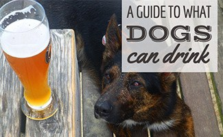 Dog sittine next to glass of beer (caption: Guide to what Dogs Can Drink)