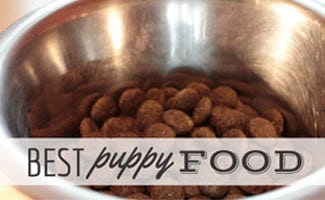 Bowl of puppy food (caption: Best Puppy Food)
