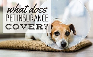 Dog sad with cone on head (caption: What Does Pet Insurance Cover?)