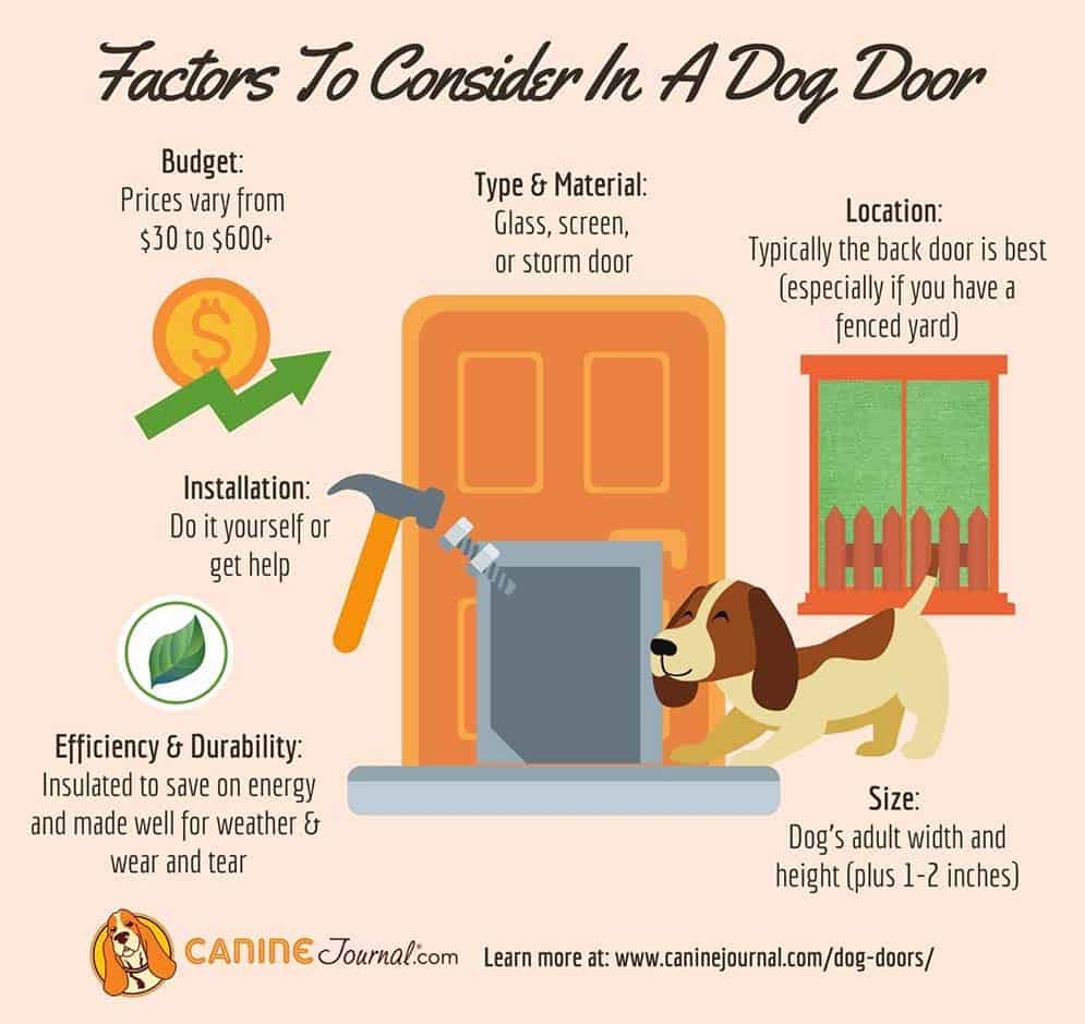 Things To Consider In Dog Door Infographic