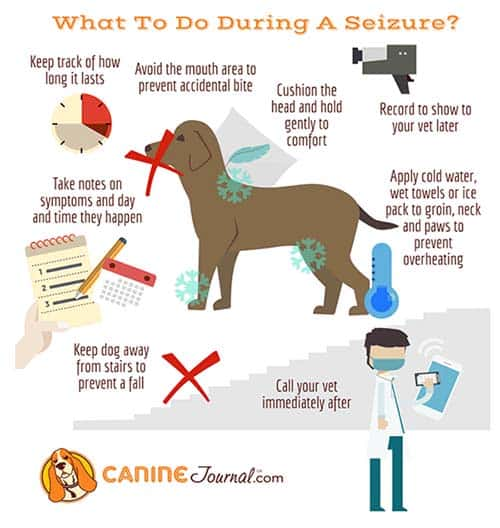 What To Do When A Dog Has A Seizure