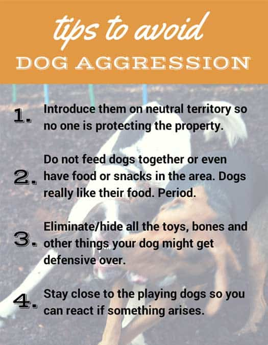 Infographic: Tips to Avoid Dog Aggression