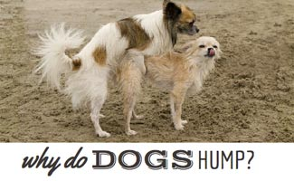 Why do dogs hump on the beach?