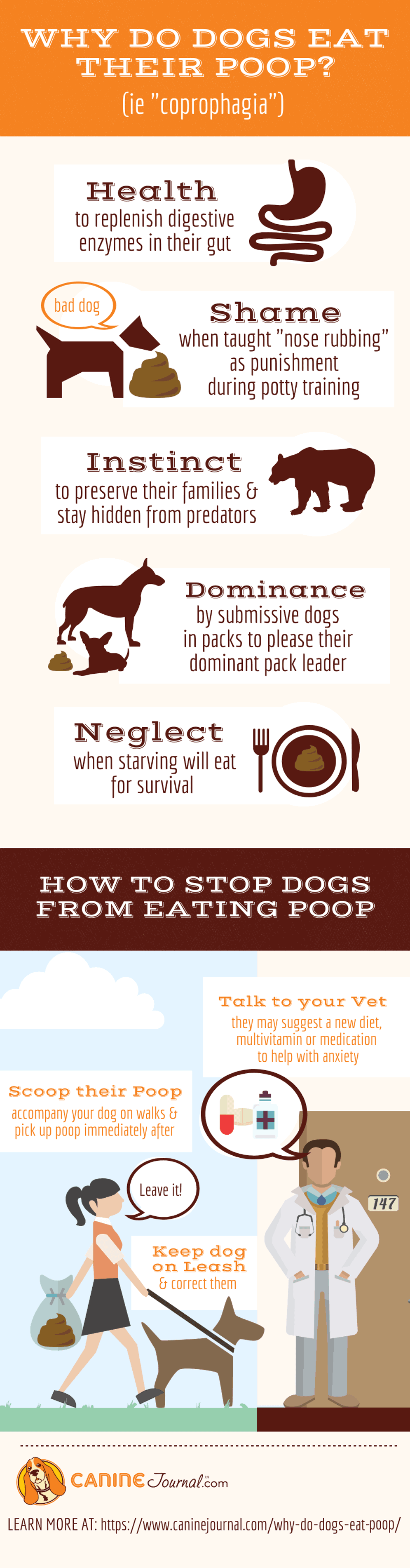 Why Dogs Eat Poop Infographic