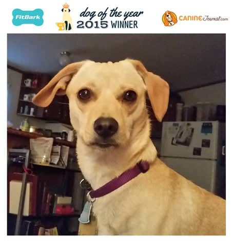 Peanut: 2015 Dog of the Year Winner