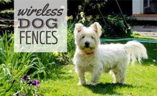 Dog in yard with Wireless Dog Fence