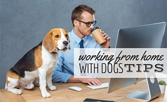 A person dressed in a blue button-up shirt and blue tie working at a desktop computer while a dog sits on the desk next to them. (Caption: Working From Home With Dogs Tips)